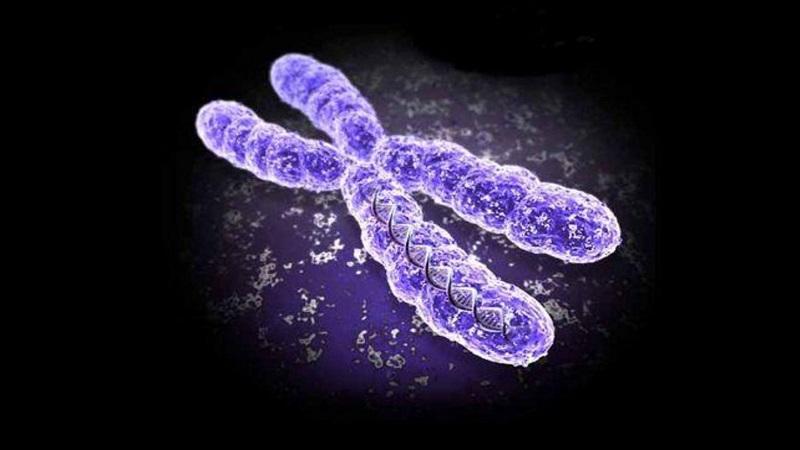کروموزوم چیست؟   بهترین آزمایشگاه ژنتیک اصفهان